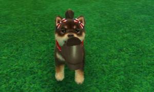 dogs0835.jpg