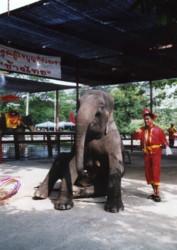 Thailand-elephant1.jpg