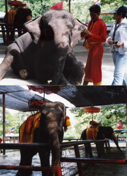Thailand-elephant2.jpg
