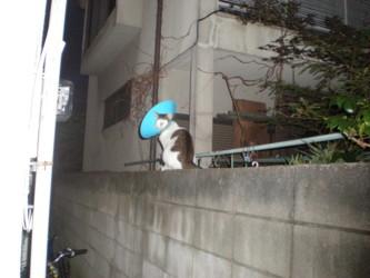 asagaya-street18.jpg