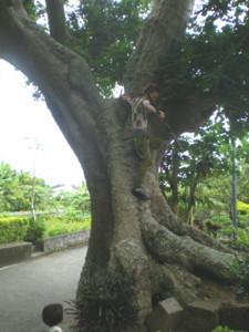 kakeroma-tree-climber1.jpg