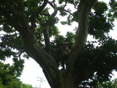 kakeroma-tree-climber2.jpg