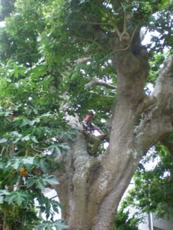 kakeroma-tree-climber3.jpg
