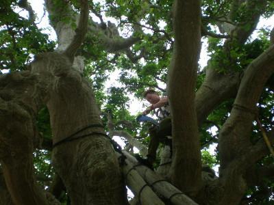 kakeroma-tree-climber4.jpg