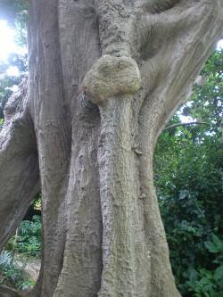 kakeroma-tree2.jpg