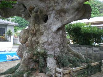 kakeroma-tree4.jpg