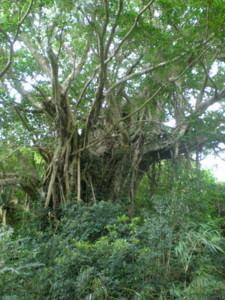 kakeroma-tree6.jpg