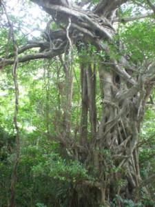 kakeroma-tree7.jpg