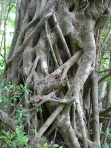 kakeroma-tree9.jpg