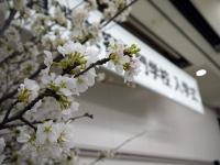 入学式2012_01