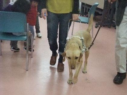 募金 デモ犬