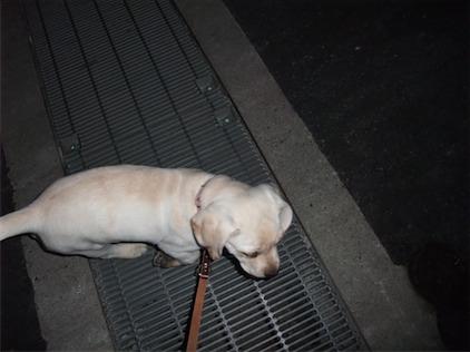 夜の散歩グレート