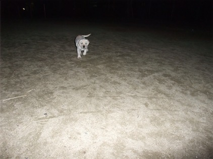 夜の散歩公園