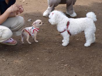 7月2日白犬と
