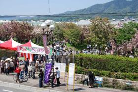 090419広島造幣局桜