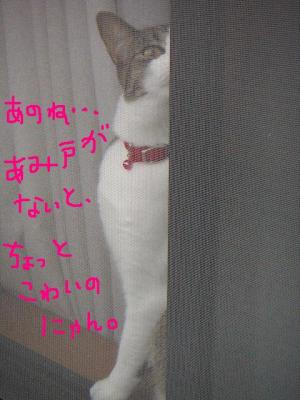 20060611104545.jpg