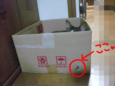 この箱 相当気に入ってくれたみたいです・・・♪