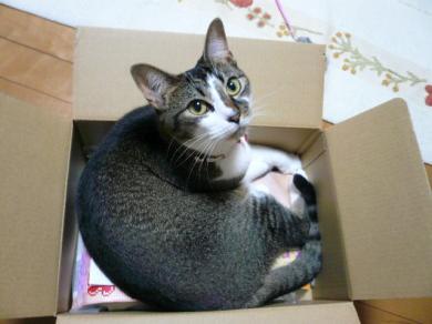 この箱、大きさ的には はなちゃんサイズだと思うのにゃよ・・・