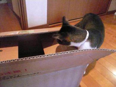 あ・・・ また新しい箱にゃ・・・