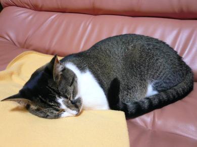 ママはとなりで本読んでるから、ぐっすりおやすみ♪