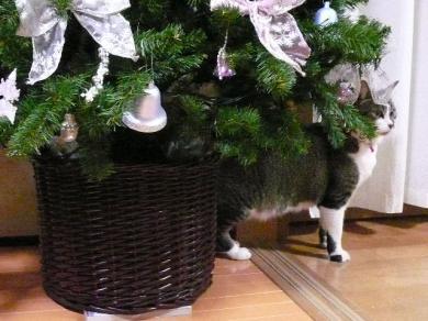 急にやめるのって 猫のお約束???