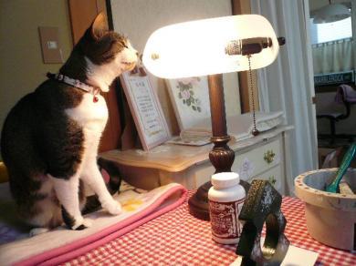 このライトがあったかくてキモチいいみたい♪