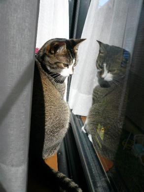 """""""でも 窓のそばって ちょっとひんやりにゃの・・・"""""""