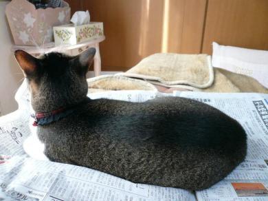 新聞猫、発見!