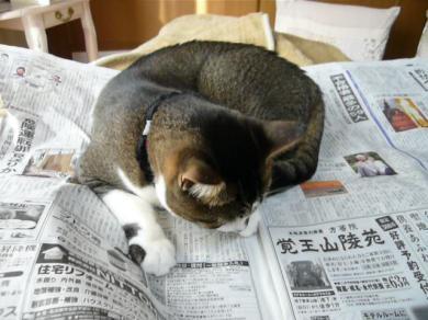 新聞って 何がそんなに魅力的なんだろうね・・・