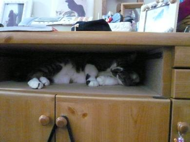 ん?寝てるの???