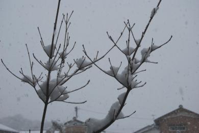 日本に帰国して 初めての雪です