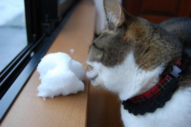 はなちゃん、久々の雪だね~♪