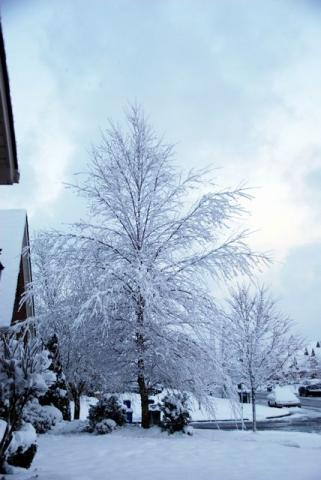 2012年3月5日ようやく雪