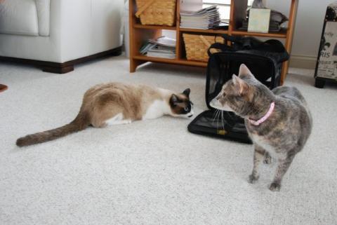 りんちゃん 猫に気づかず・・・