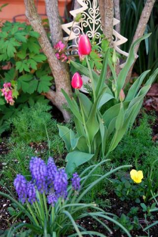 2012年3月22日こぼれ種花壇♪