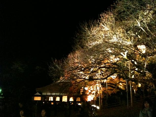 閑谷学校ライトアップ3