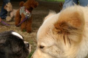 大きな犬と一緒