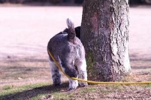 犬の尻尾~。