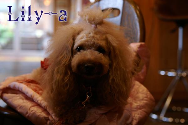 Liliy-a