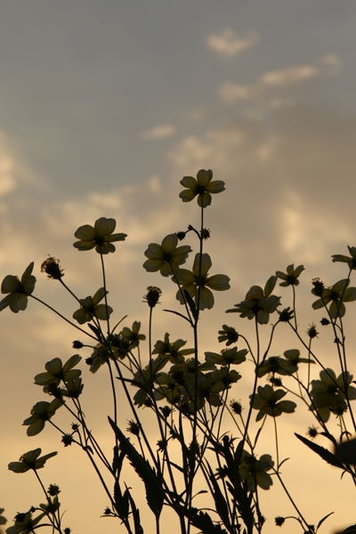 逆光でお花2