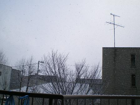3月24日 雪が降りました