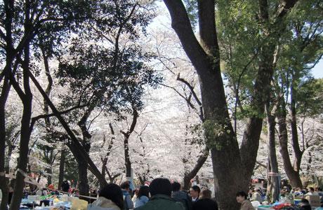 hanami-ueno2012-4.jpg