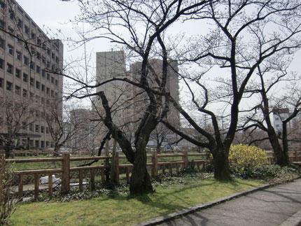 matukawa-2012-4-10.jpg
