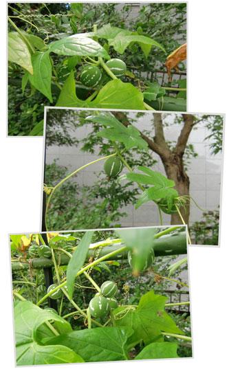 okisuzu2011-9.jpg