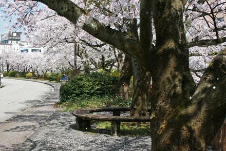 sakura-dennkibiru2012-4.jpg