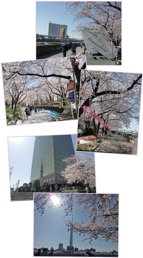 sakura-sumidagawa2012-4.jpg