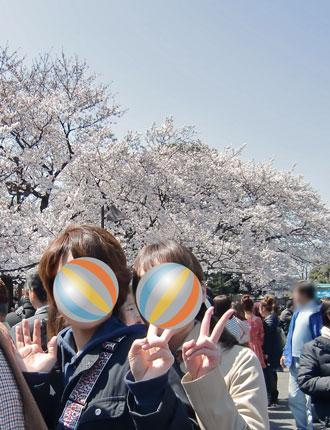 sakura-uenokouen2012-4.jpg