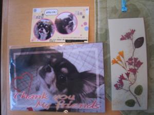 0524 012 杏ちゃん カード