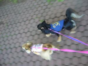 0602 001 中島公園お散歩