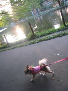 0806 004 池周りお散歩くるみ